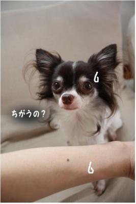 コピー (5) ~ ブーム