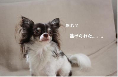 コピー (3) ~ ブーム