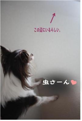 コピー (2) ~ ブーム