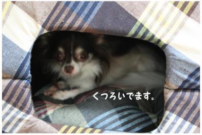 コピー (5) ~ おにゅー