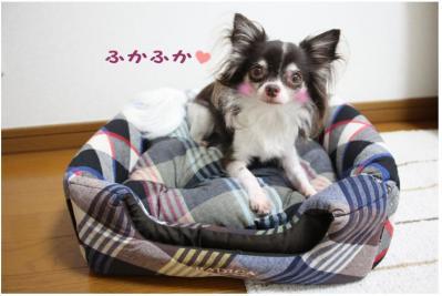 コピー (6) ~ おにゅー