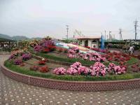 バラ公園-1