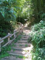 酒船石までの竹林