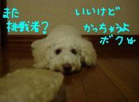 20051010234139.jpg