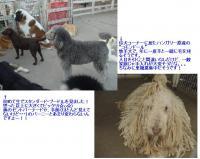 20051103232449.jpg