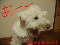 20051230004113.jpg