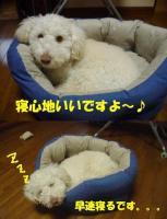 20060113182911.jpg