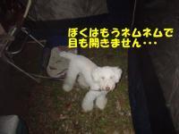 20060920114514.jpg