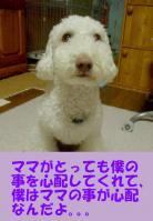 20061106125644.jpg