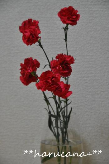 hahanohi+003_convert_20100510004040.jpg