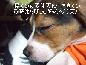 アルフ寝顔