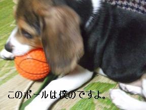 ボール遊びアルフ1