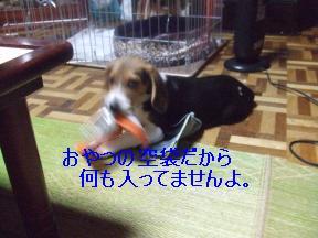 食いしん坊アルフ1
