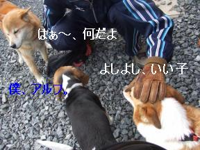 柴犬さん2