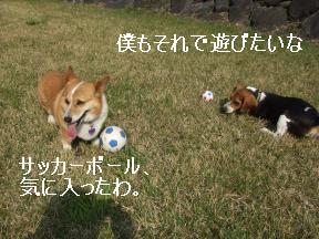 ボールと2匹