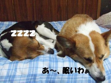 寛ぐ姉弟2