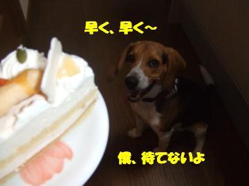 アルフケーキ待て