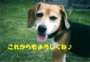 コピー ~ hana