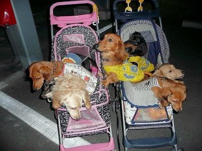 Lovable Dogs Sorriso