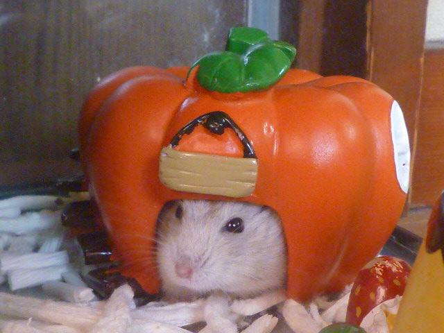 ピンちゃんと かぼちゃ♪