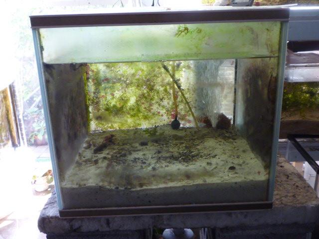 カエルアンコウ水槽。