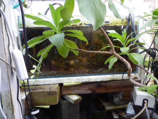 小型ハゼ・ソフトコーラル水槽。