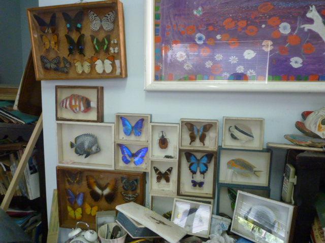 蝶の標本。