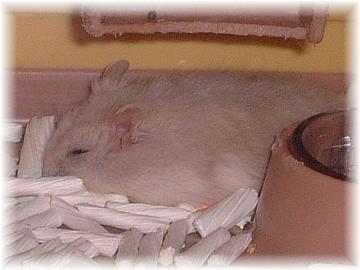 リリー のびのび寝