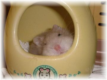 リリーお昼寝中(トイレで)