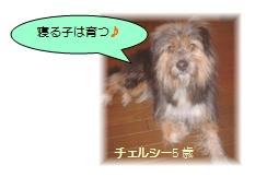 2009y01m05d_160554866.jpg