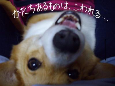 かじりー3