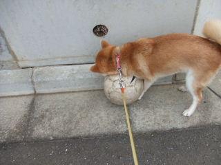 ボールみつけた