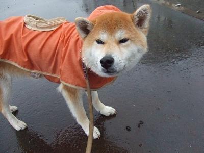 雨は嫌だな
