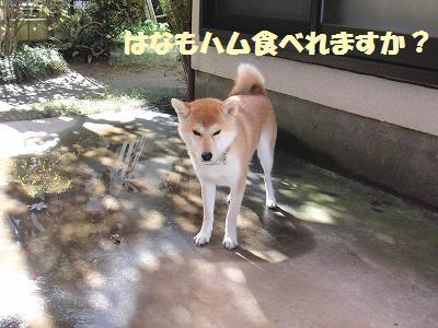 CIMG0365_20101210170639.jpg
