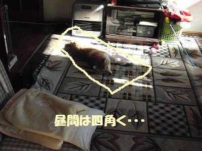 CIMG0653_20100125072851.jpg