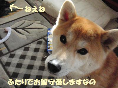 CIMG0752.jpg