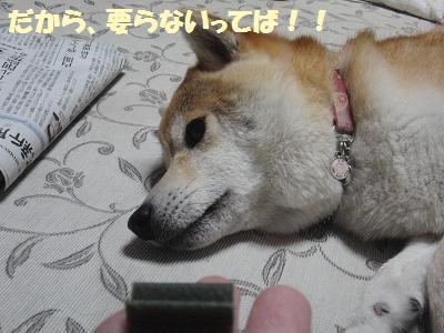 CIMG1790_20100713183013.jpg