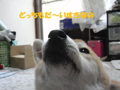 CIMG1981_20100810090909.jpg