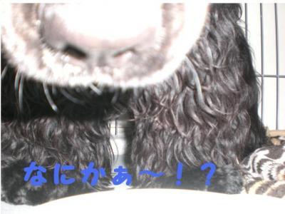 縺ェ縺ォ縺九=・枩convert_20100823234153