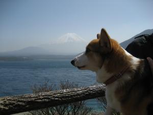 富士山とお見合い