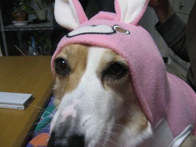 うさぎ犬1