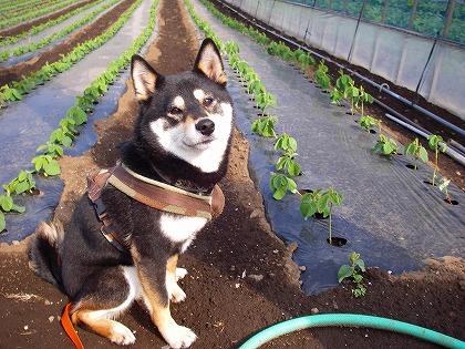 枝豆とはな