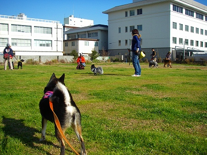 広場でトレーニング
