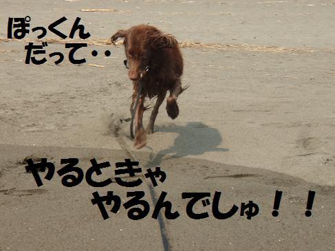 コピー ~ 13SEP08 088