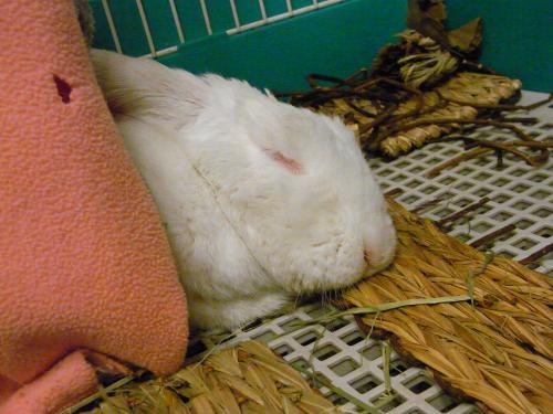 なにいきもの寝姿。