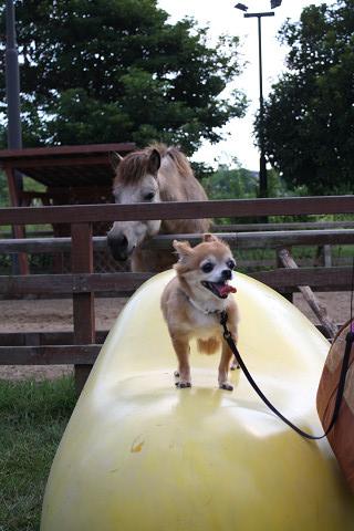馬とルビー1