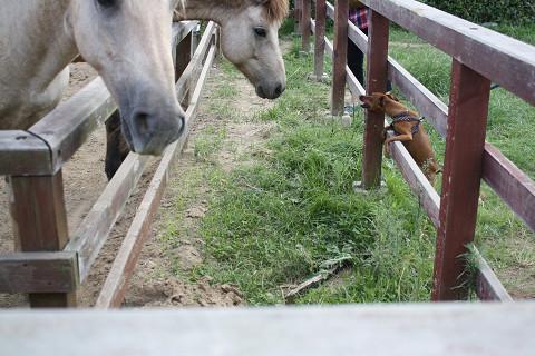 馬とハンナ