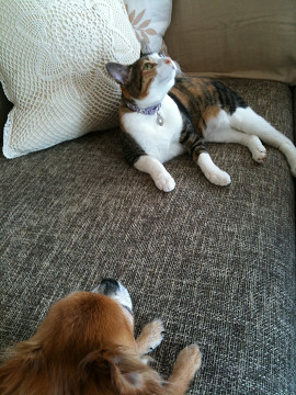 カボ&ルビー