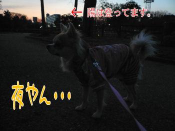 komu0203-003