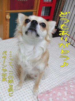 komu0418001